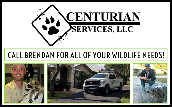 Boca Raton Wildlife Removal